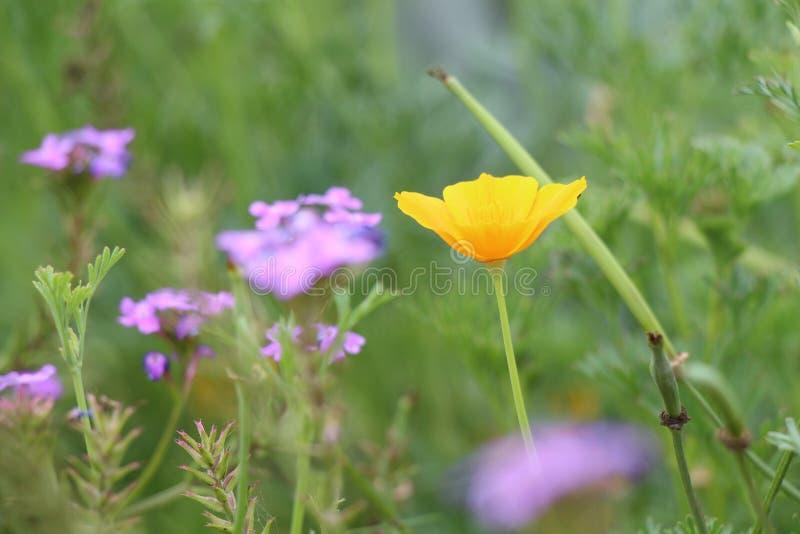 Blumen stellen gegenüber und färben Ansicht lizenzfreie stockfotografie