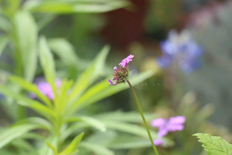 Blumen stellen gegenüber und färben Ansicht stockfotos