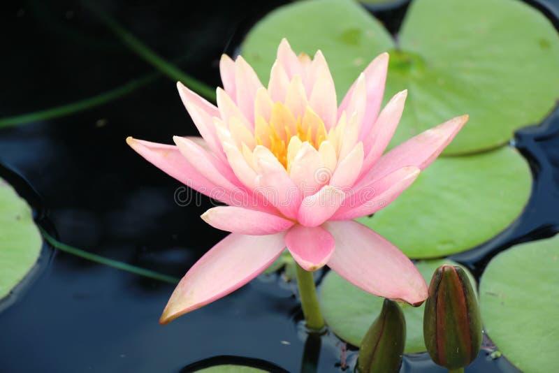 Blumen stellen gegenüber und färben Ansicht stockfotografie