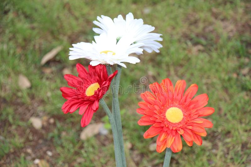 Blumen stellen gegenüber und färben Ansicht lizenzfreie stockfotos