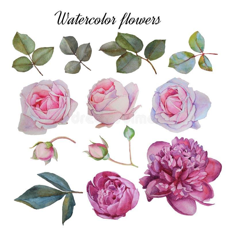 Blumen stellten von Hand gezeichneten Aquarellpfingstrosen, -rosen und -blättern ein vektor abbildung