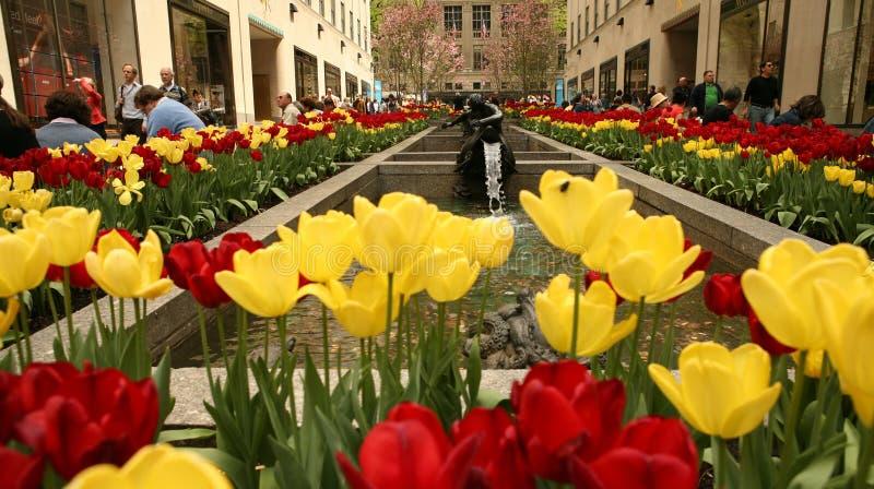Blumen-Straße in N.Y. Stadt lizenzfreie stockfotografie
