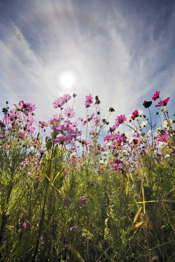 Blumen in Sun stockbilder