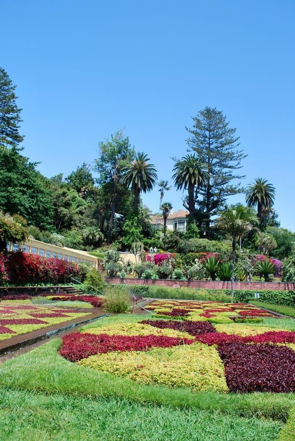 Blumen tbe im botanischen Garten von Funchal lizenzfreies stockfoto
