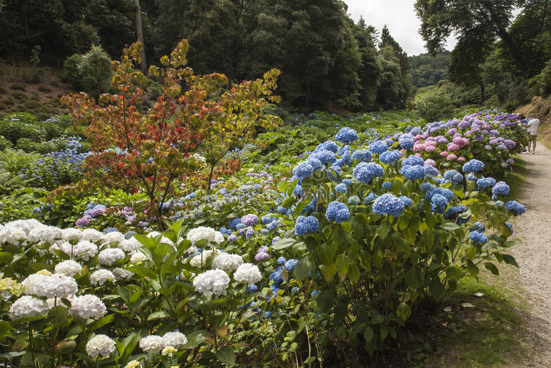 Gärten In Cornwall blumen an trebah gärten cornwall stockfoto bild blumen laub