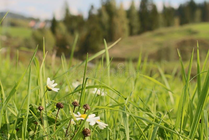 Blumen u. Gras stockbild
