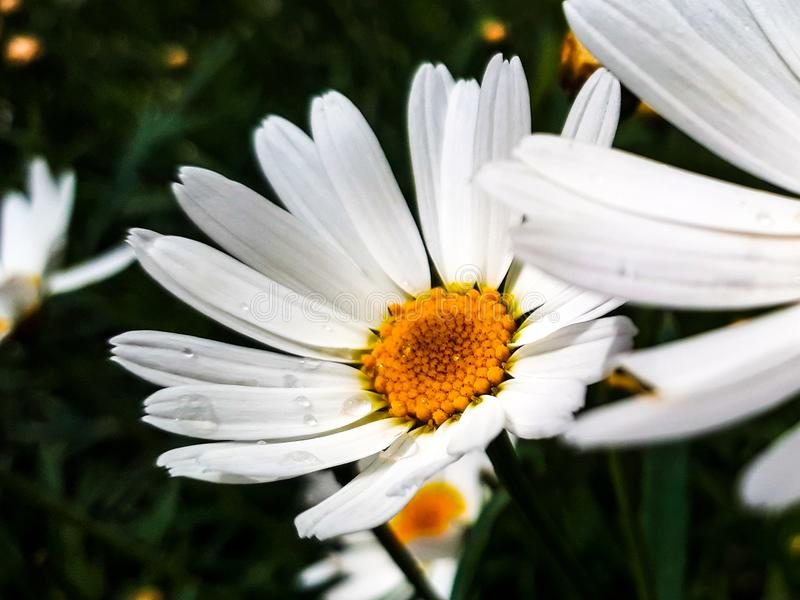 Blumen UHD stockfoto