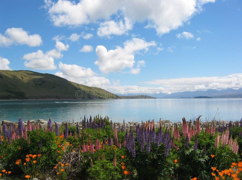 Blumen um einen See stockfotografie