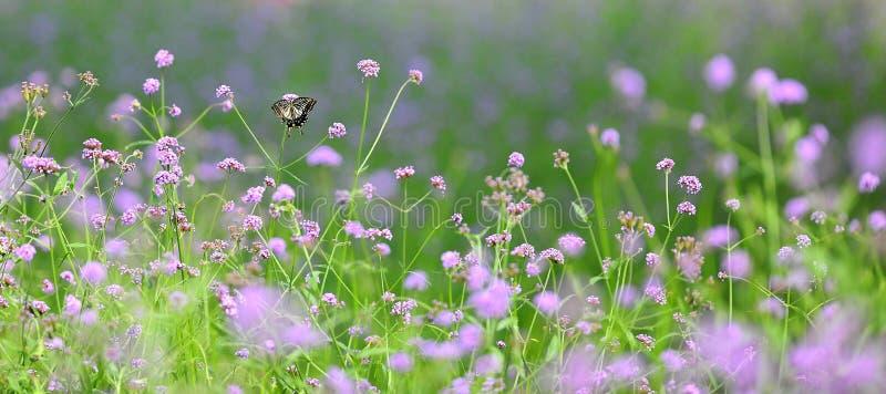 Download Blumen und Anlagen stockfoto. Bild von auslegung, abbildungen - 26350442