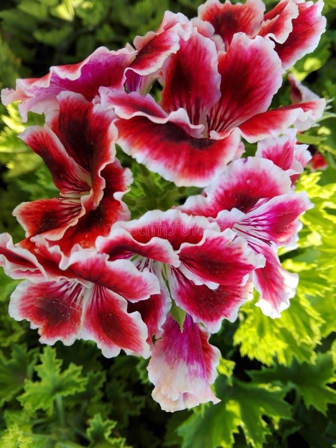 Blumen und Anlagen lizenzfreie stockbilder
