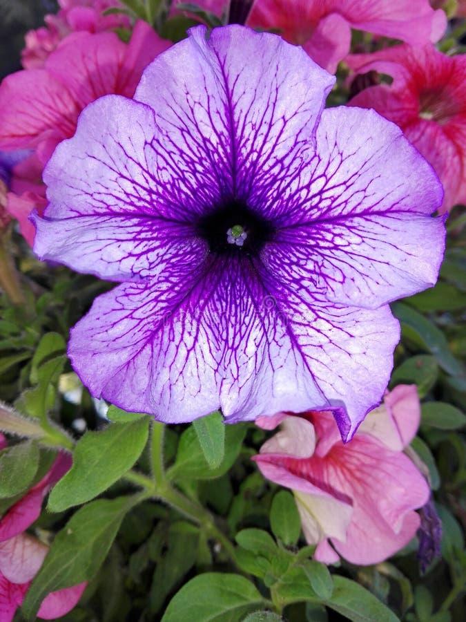 Blumen und Anlagen stockfoto