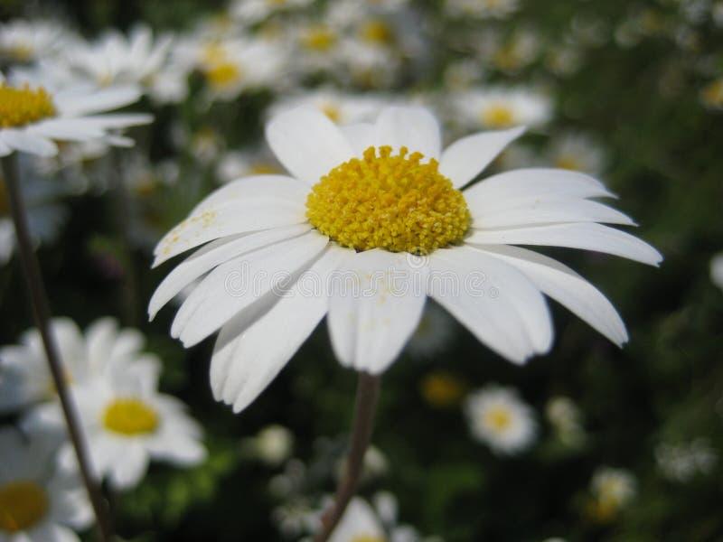Blumen und Anlagen stockfotografie