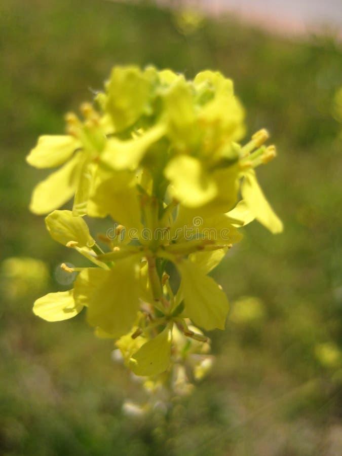 Blumen und Anlagen stockfotos