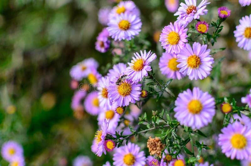 Blumen und Biene stockfoto