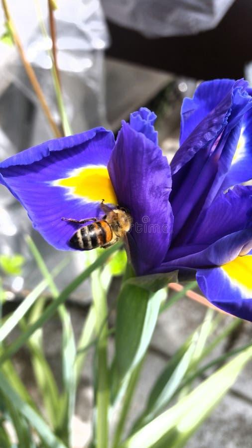 Blumen und Bienen στοκ φωτογραφία με δικαίωμα ελεύθερης χρήσης