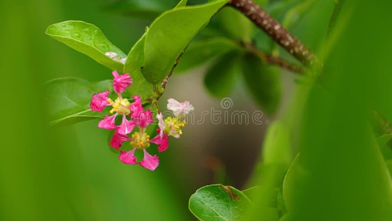 Blumen und Blätter auf grünem Hintergrund Kirschblütendesign stockfotografie