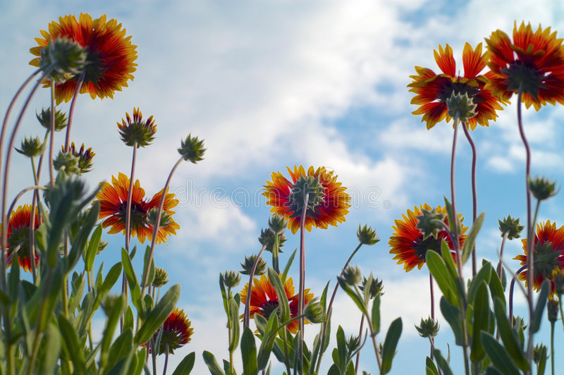 Blumen und cloudlets stockbild