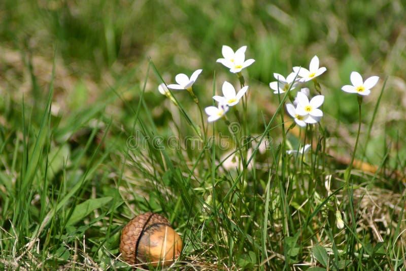 Blumen und Eichel lizenzfreie stockfotografie
