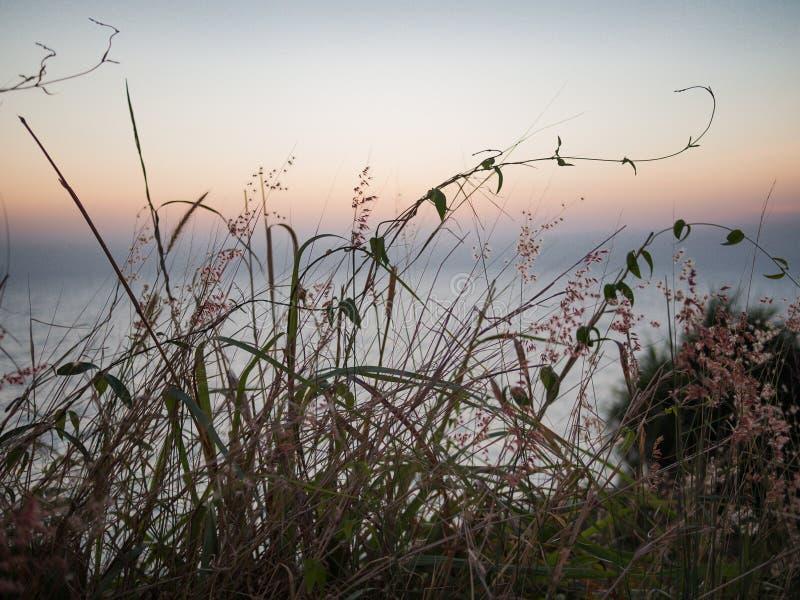 Blumen und ein schöner Sonnenuntergang auf Thailand-Küste stockfoto