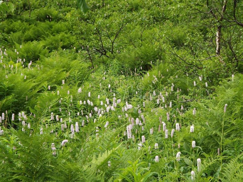 Blumen und Farn auf einer sonnigen Wiese lizenzfreies stockbild