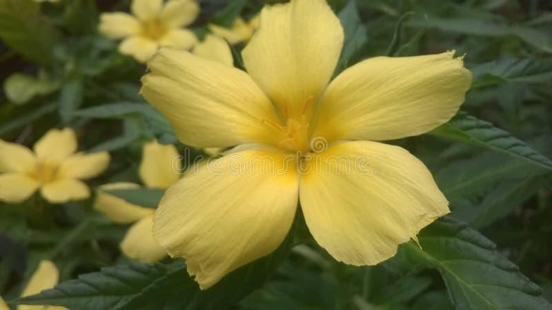 Blumen und Gärten lizenzfreies stockfoto