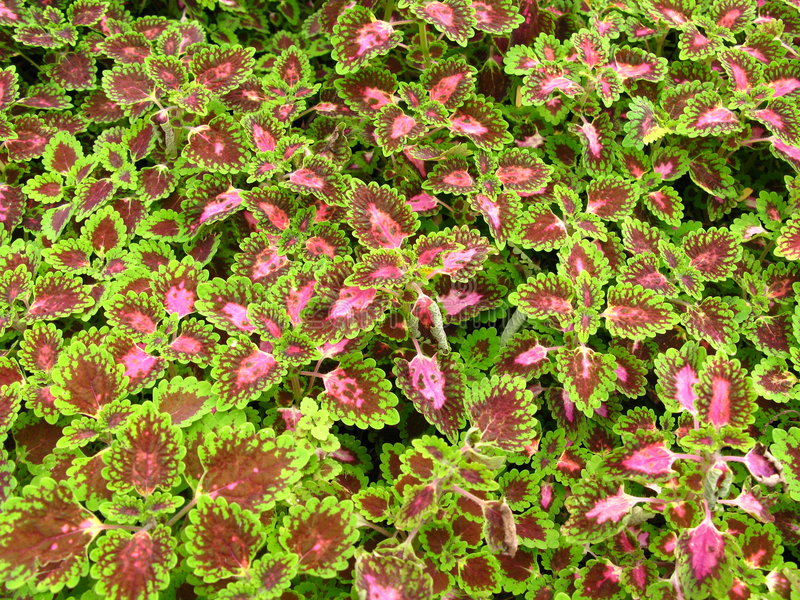 Blumen und Gärten 6 stockbild