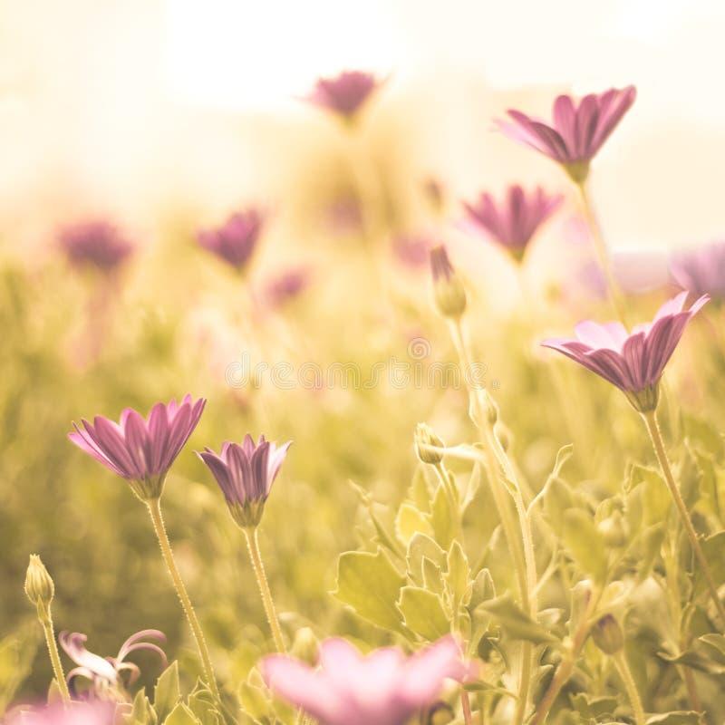 Blumen und Garten stockfoto