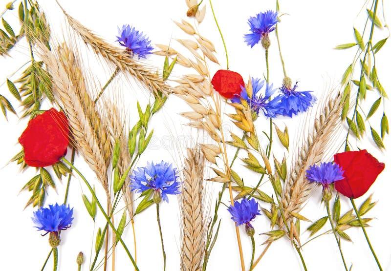 Blumen und Getreide lizenzfreies stockfoto