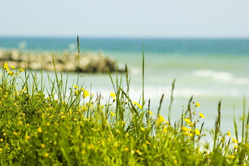 Blumen und grüne Felder durch das Meer. stockfotos