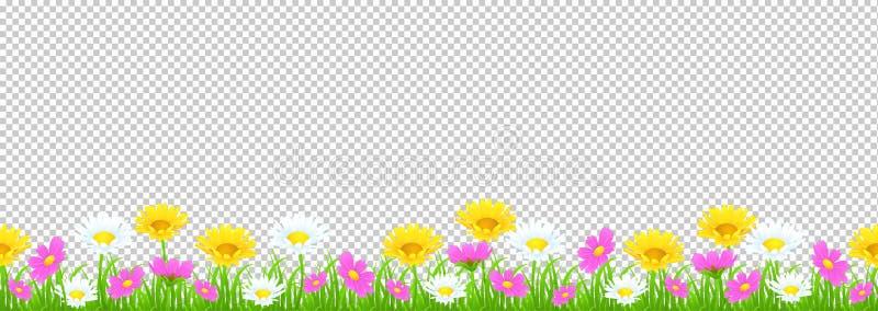 Blumen und Grasgrenze, gelbe und weiße Kamille und empfindliches rosa Wiesenblumen- und Grünesgras auf transparentem Hintergrund, lizenzfreie abbildung
