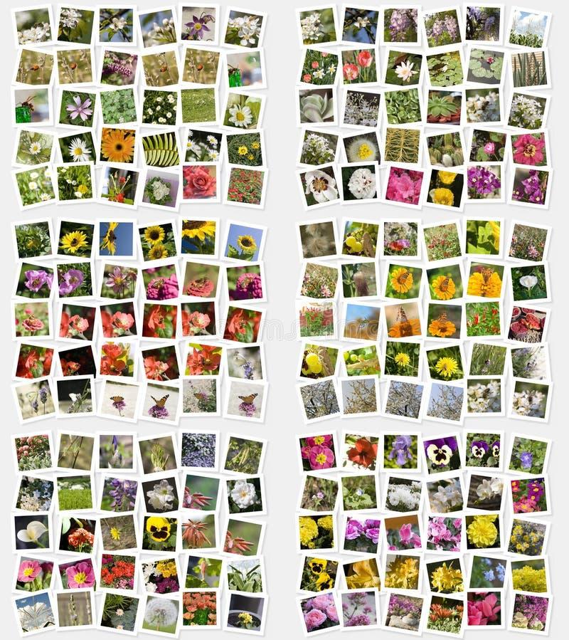 Blumen und Insektpostkarten lizenzfreie stockbilder