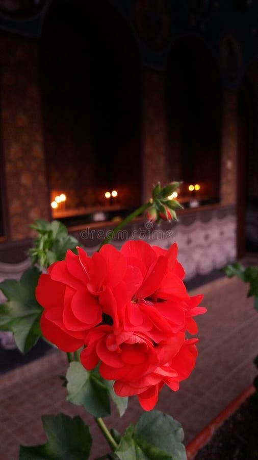 Blumen und Kerzen stockfotos