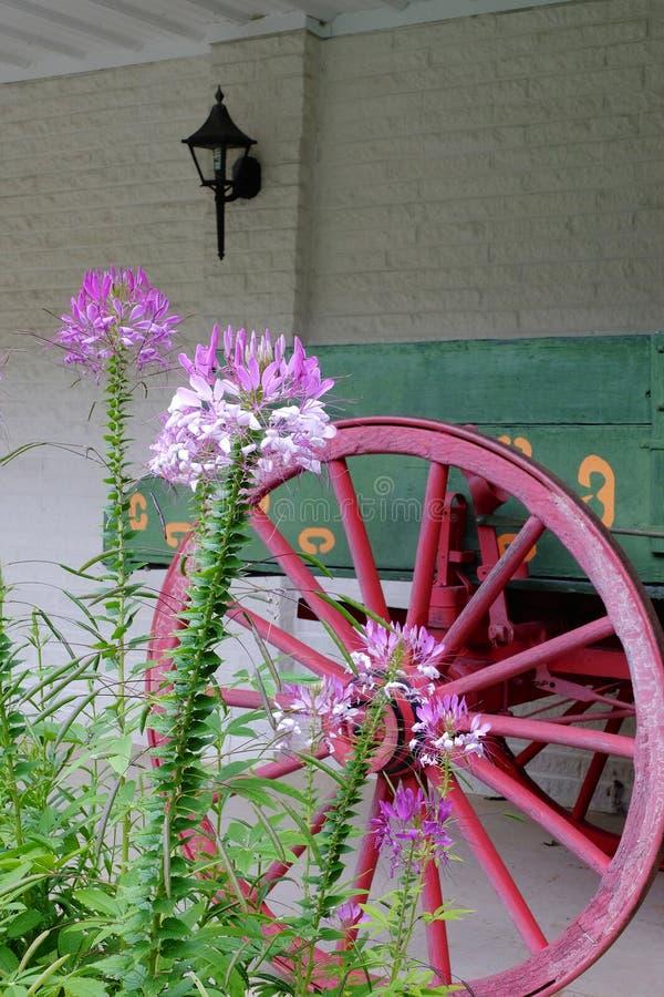 Blumen und Lastwagen-Rad lizenzfreie stockbilder