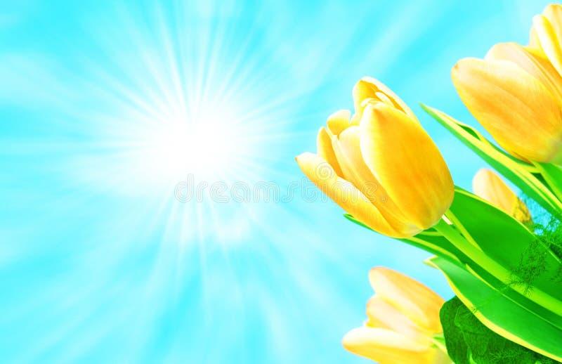 Blumen und Sonne lizenzfreies stockbild