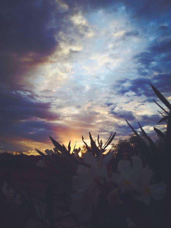 Blumen und Sonnenuntergang lizenzfreies stockfoto