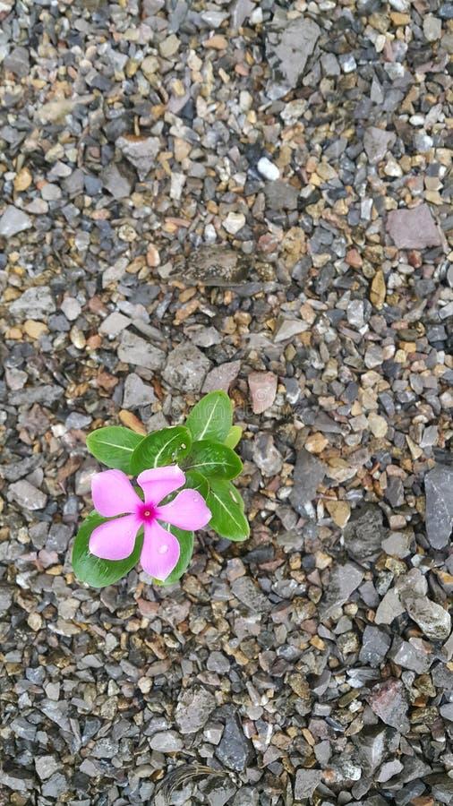 Blumen und Steine stockfotos