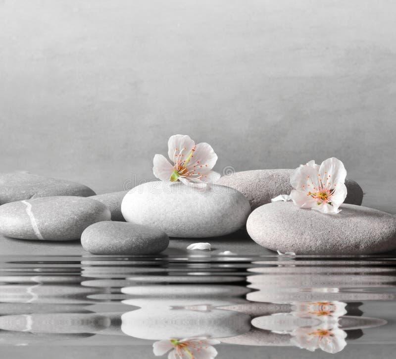 Blumen- und Steinzenbadekurort auf grauem Hintergrund stockbilder