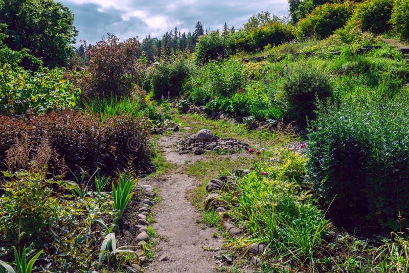 Blumen und Sträuche wachsen fast auf Steinen, die fruchtbare Schicht auf der Insel von Valaam ist sehr dünn stockfoto