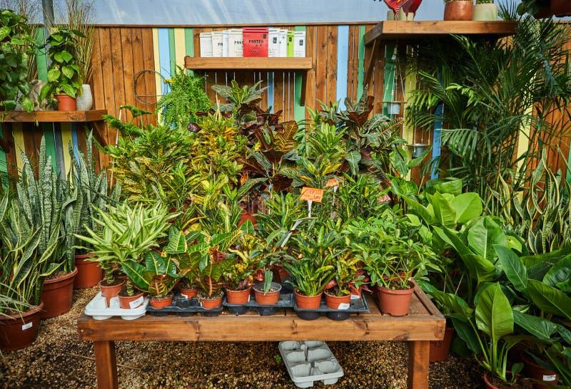Blumen und Zimmerpflanzen im Gew?chshaus im Winter lizenzfreie stockbilder