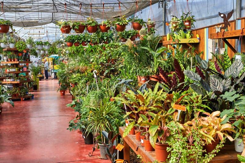Blumen und Zimmerpflanzen im Gew?chshaus im Winter stockfoto
