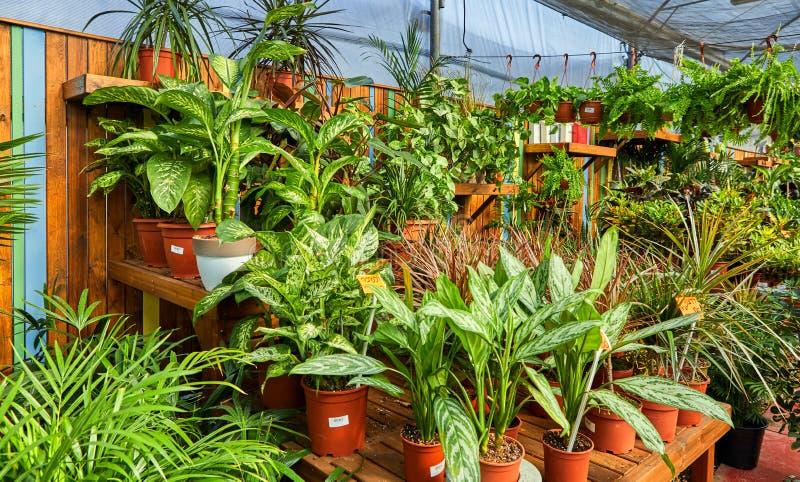 Blumen und Zimmerpflanzen im Gew?chshaus im Winter stockfotografie
