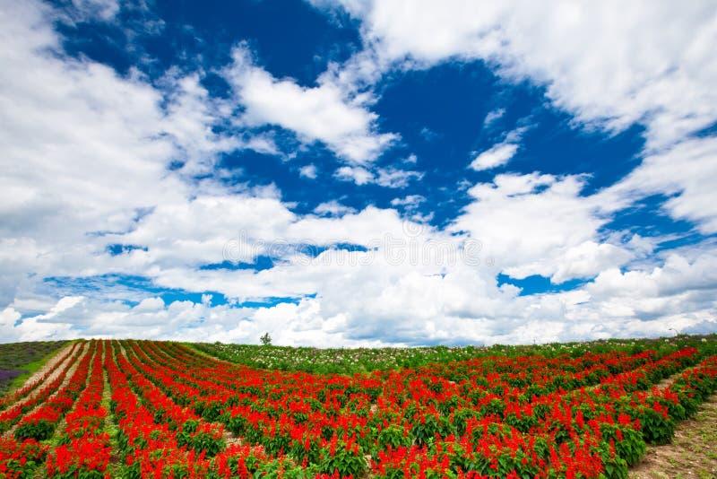 Blumen unter blauem Himmel stockfotos