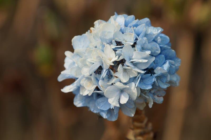 Blumen von dooars lizenzfreies stockfoto