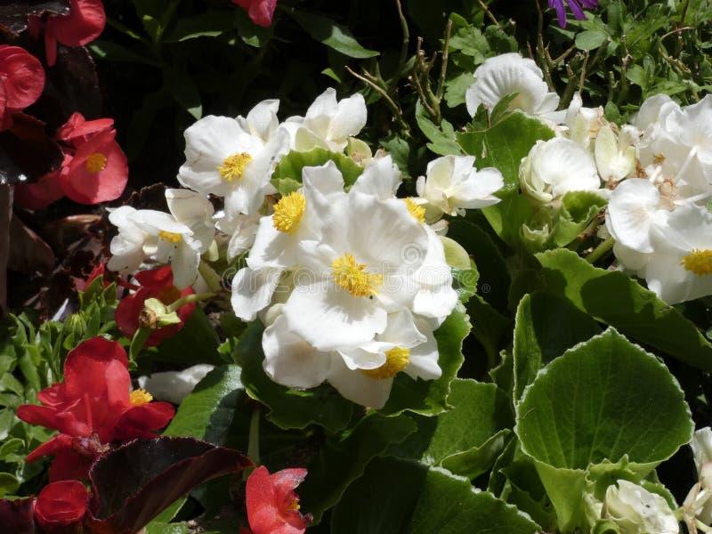 Blumen von Gartenfarben im Sommer stockfotos