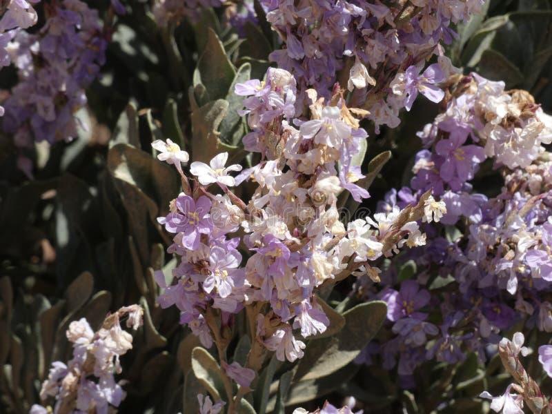 Blumen von Gartenfarben im Sommer stockbilder
