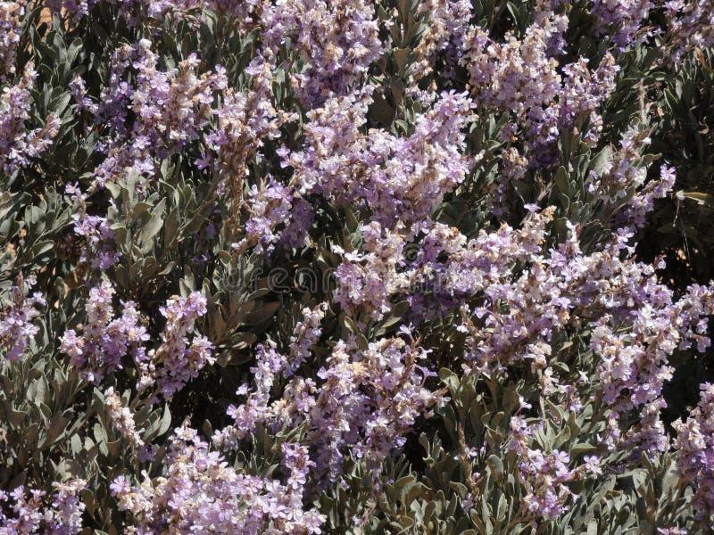 Blumen von Gartenfarben im Sommer lizenzfreie stockfotos