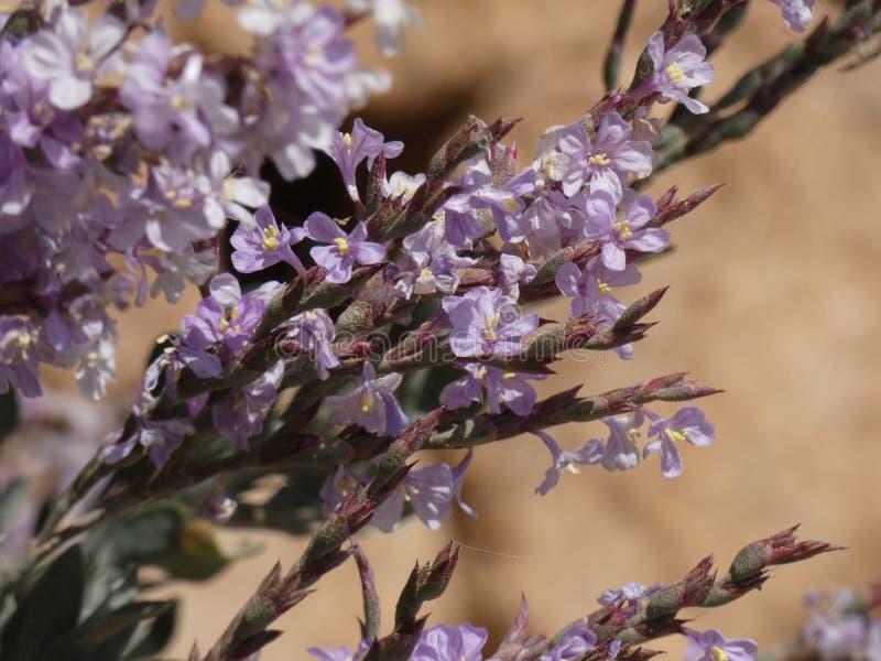 Blumen von Gartenfarben im Sommer stockfotografie