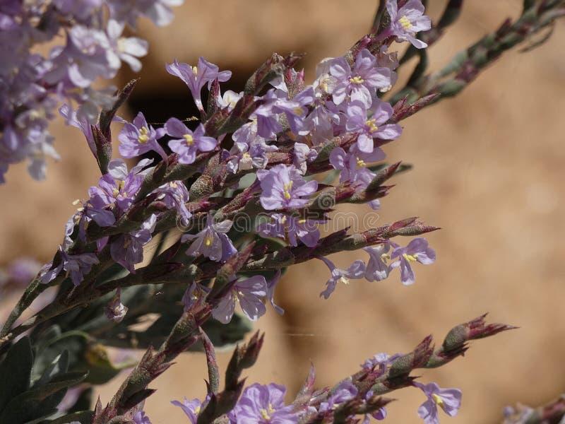 Blumen von Gartenfarben im Sommer lizenzfreie stockfotografie