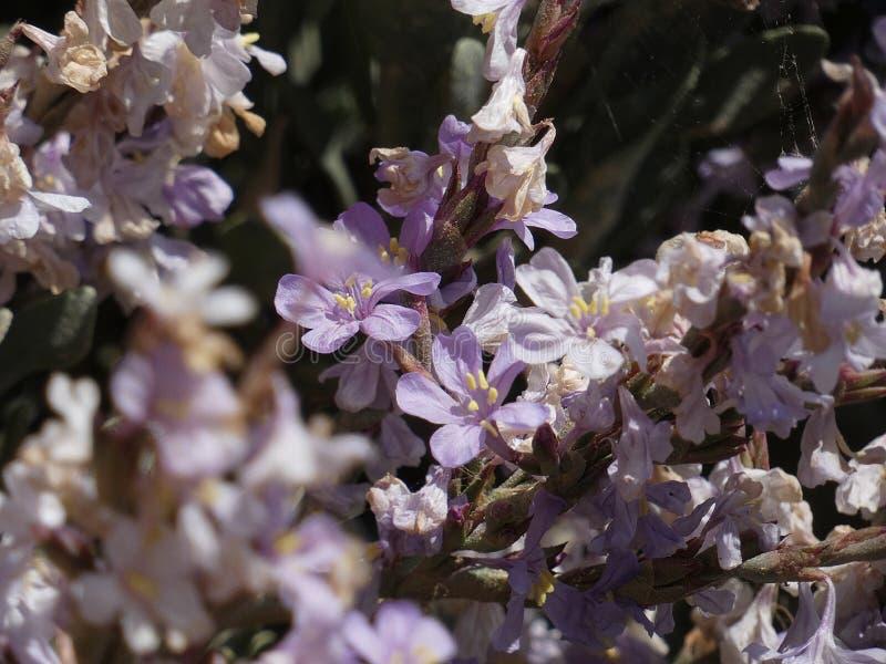 Blumen von Gartenfarben im Sommer stockfoto
