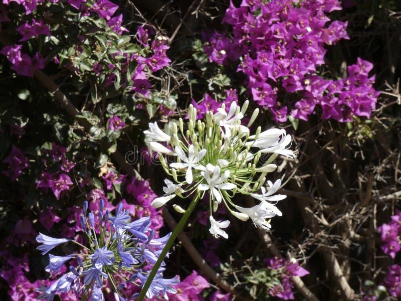 Blumen von Gartenfarben im Sommer lizenzfreies stockbild